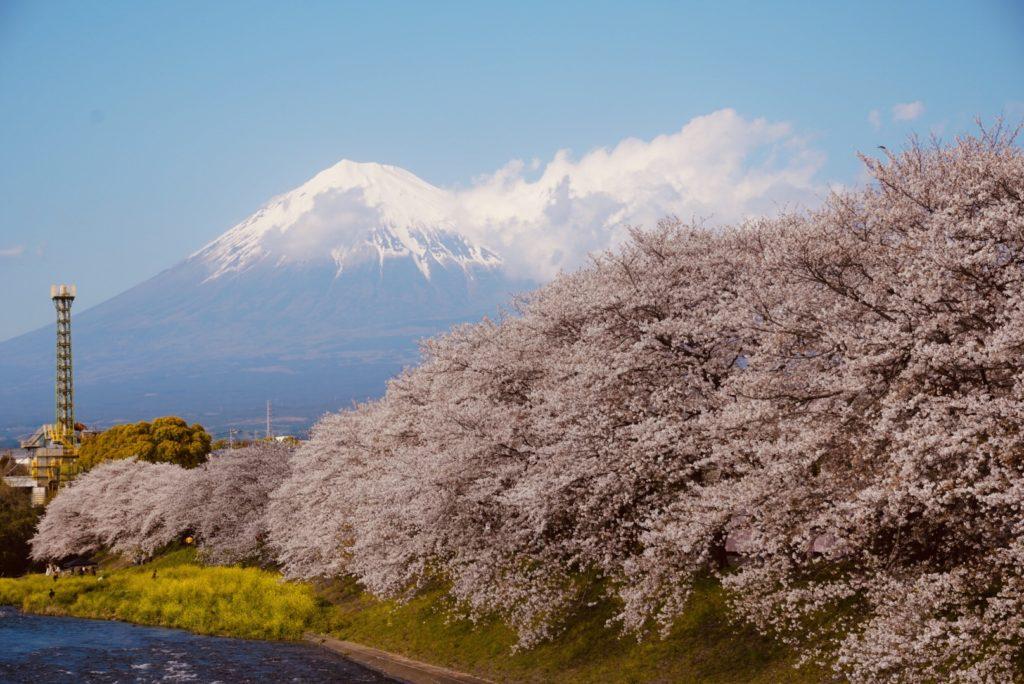 龍厳淵の桜とテレワーク